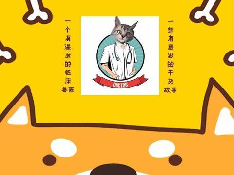 """橘猫被工商所捡回后,成功化身公务猫,猫咪版""""杜拉拉升职记""""?"""