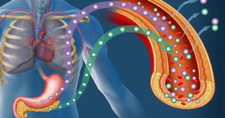 怎么促进胰岛β细胞再生?研究发现生物钟可能是关键,6点来改善