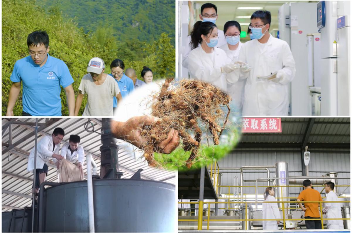 华中科技大学生物技术助力黄姜产业扶贫