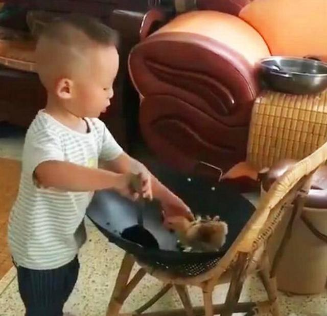 妈妈买回几只小鸡,上个厕所的功夫,3岁儿子的行为让人无法淡定