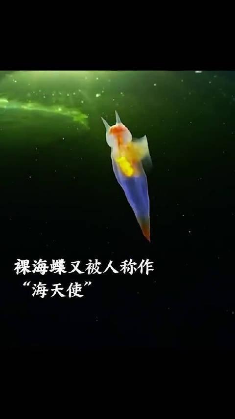惊艳!俄潜水员白海冰下拍到裸海蝶。真的像是童话里的场景!