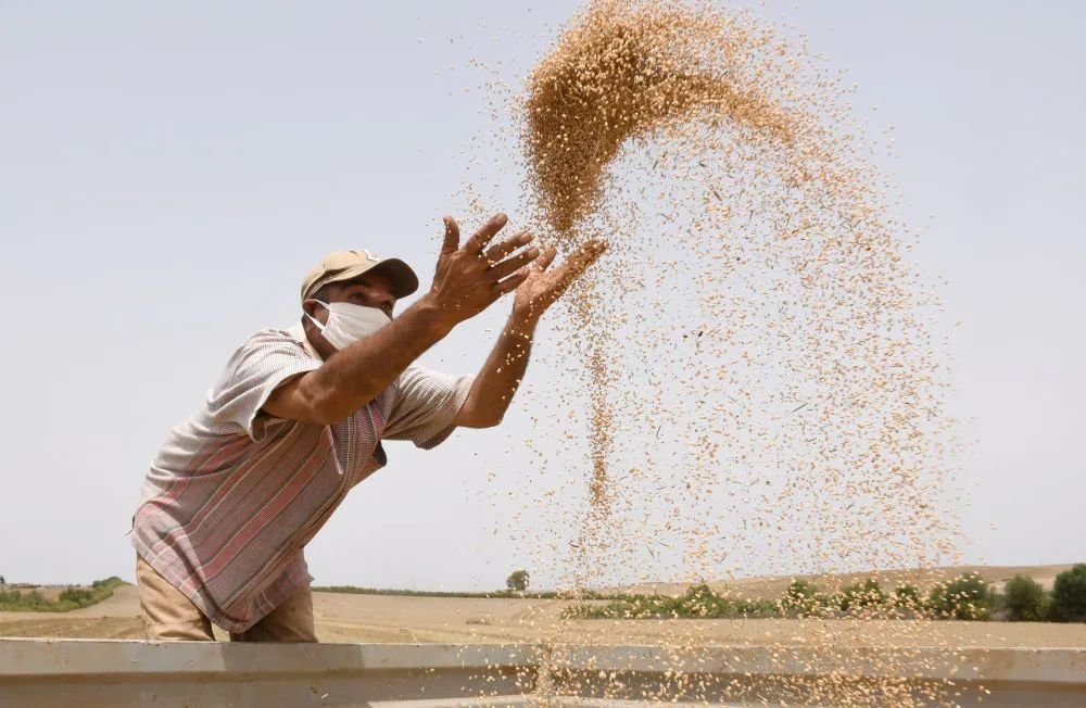 全球粮食供应疫情中维持稳定,但是……