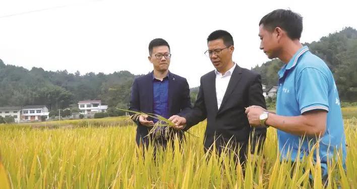 为千亩稻田开科技良方
