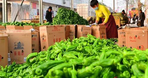 村民在包装青辣椒