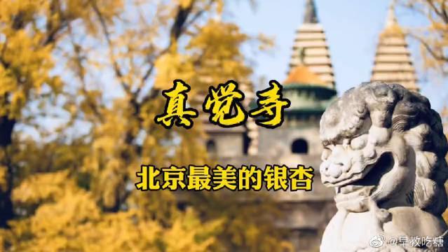 北京最美《真觉寺》这里有北京最美的银杏……