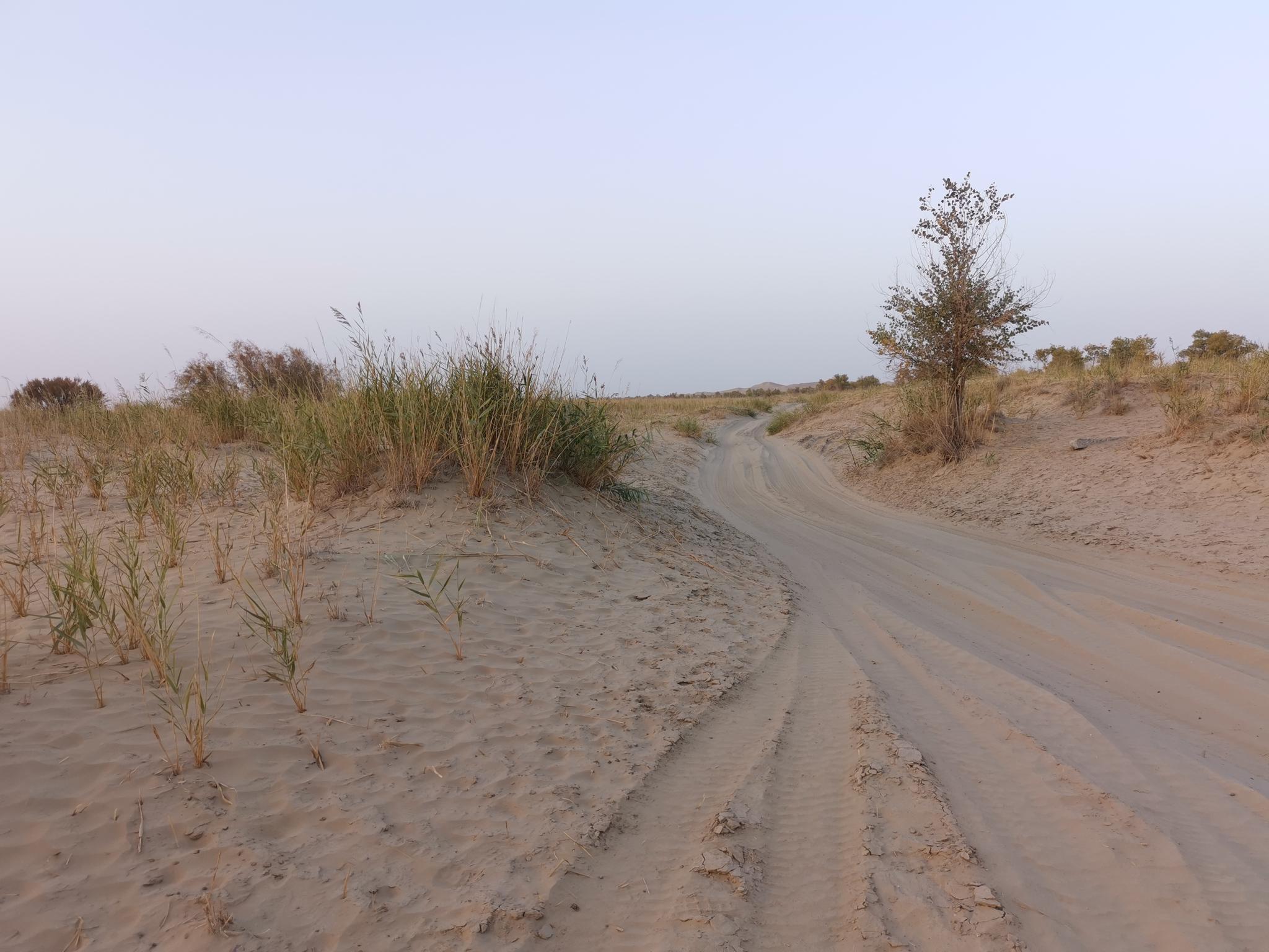 走进塔克拉玛干沙漠深处的达里雅布依