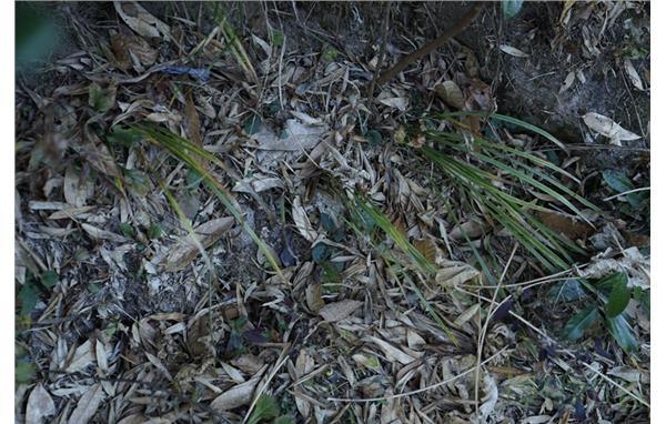 上海植物园科研人员赴天目山开展鸢尾种质资源调查