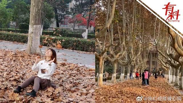 高校堆落叶供师生拍照留念 学生:满地梧桐叶非常浪漫