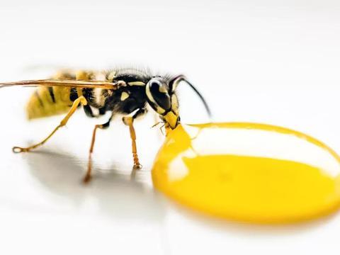 蜂蜜真的可以通便吗?蜂蜜导致性早熟?是真的吗?