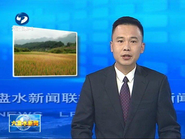 六枝特区月亮河有机农业专业合作社荣获中国绿色食品有机食品博览……