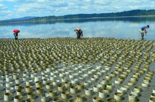 """海岸布满""""塑料管"""",渔夫告知网友这里面全是""""宝贝"""""""