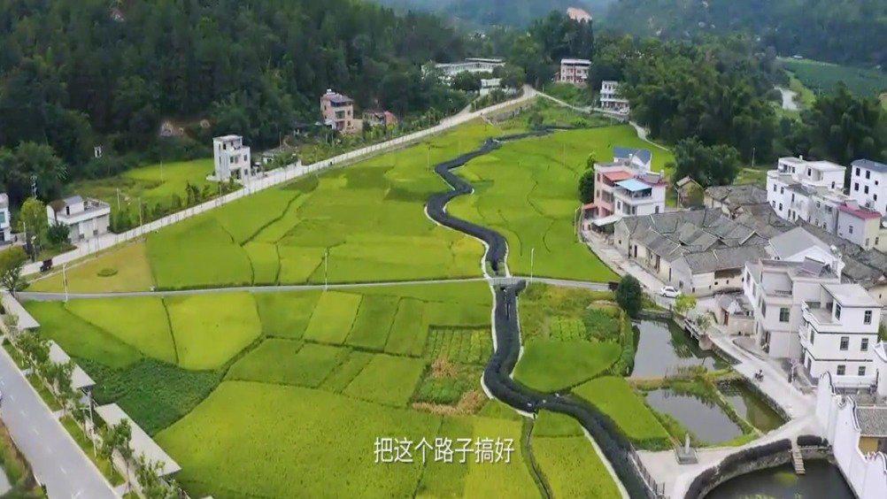 河源市东源县陈村村松嶂山,一垄垄茶树随山势蜿蜒延绵…………