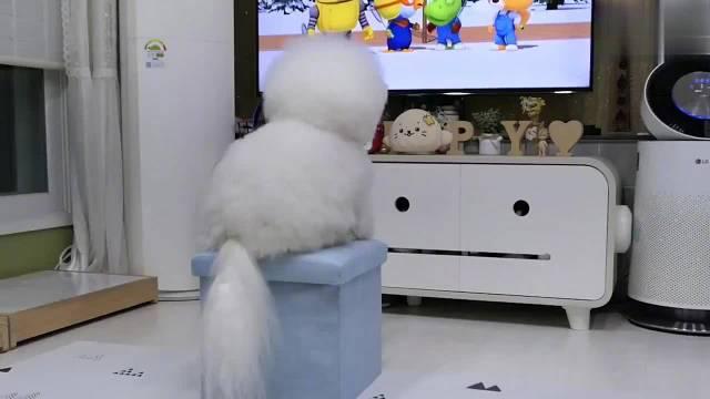 韩国这位是超级超级喜欢看电视的Toto……