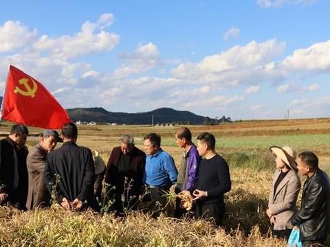 罗平县银发农业专家实地指导姜农选种窖藏