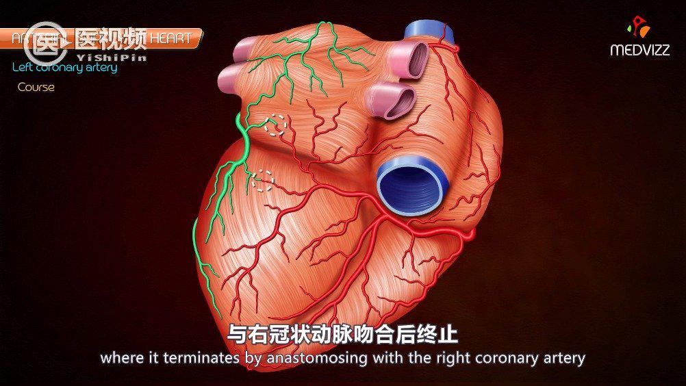 今天是 心梗的主要原因是冠状动脉粥样硬化…………