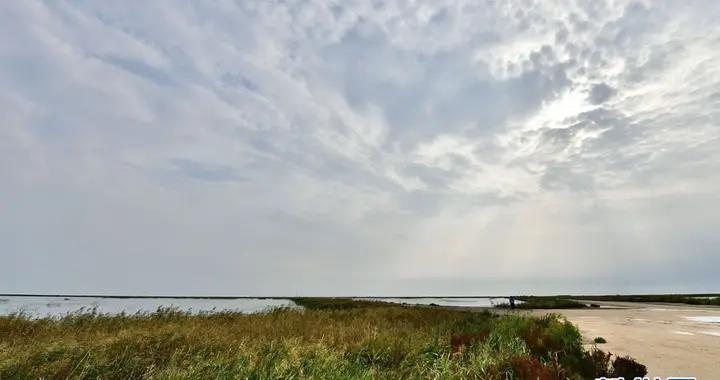 """黄河三角洲保护区:鸟类的""""国际机场"""""""
