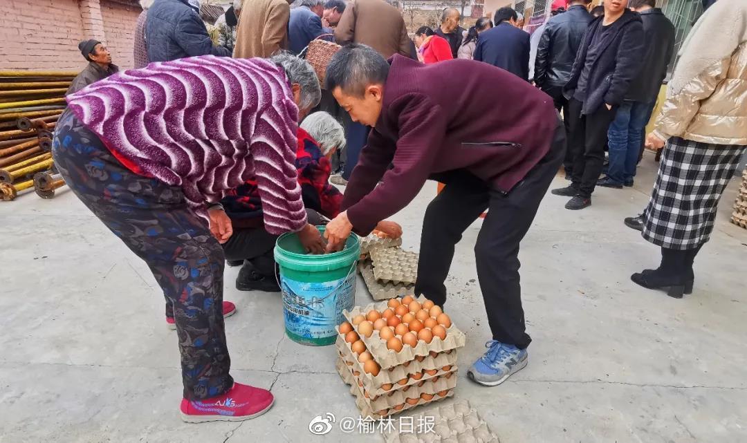 喜获养鸡分红,吴堡大枣湾村446户村民笑开颜