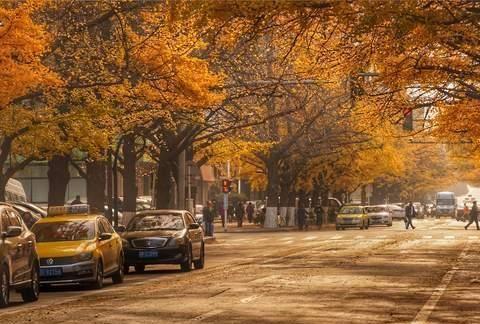 2020年秋天,若论银杏树的美丽,辽宁丹东市冠绝全国