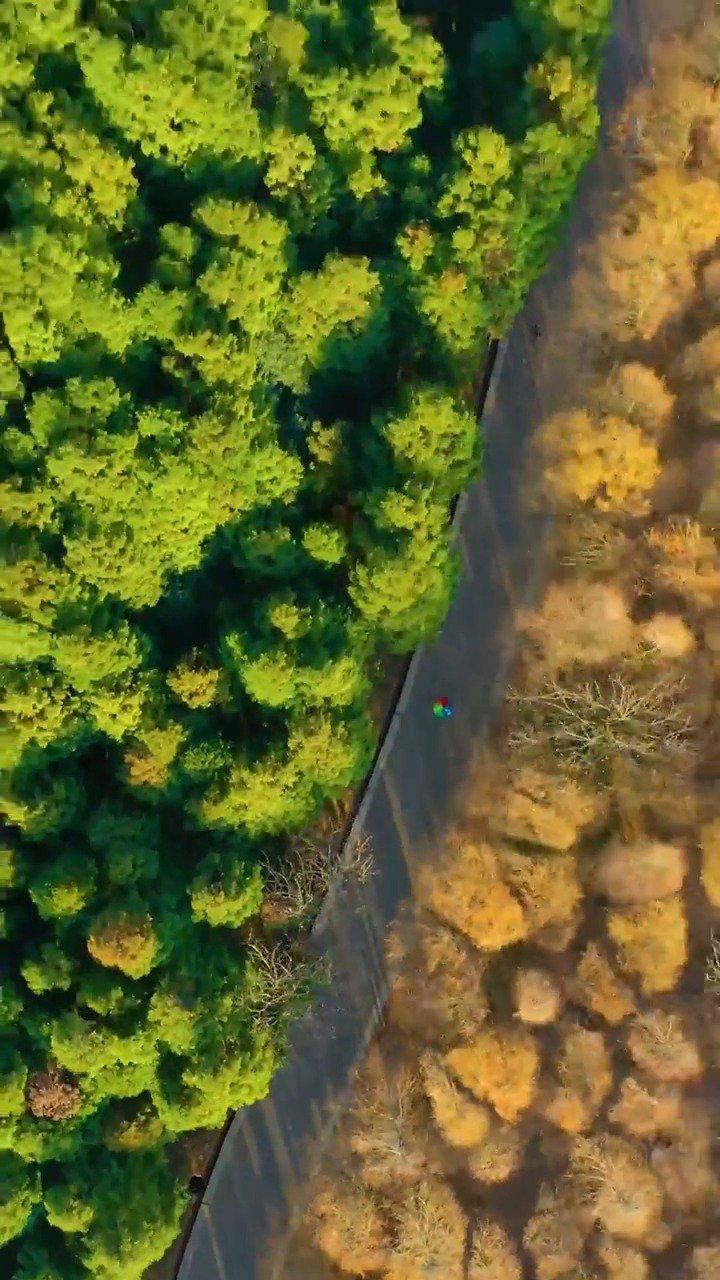 美!重庆山王坪一半秋天一半春