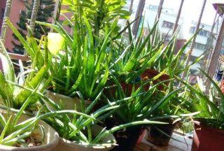 这种养花宝贝家家都有,盆底垫一些,养花不黄叶,不烂根