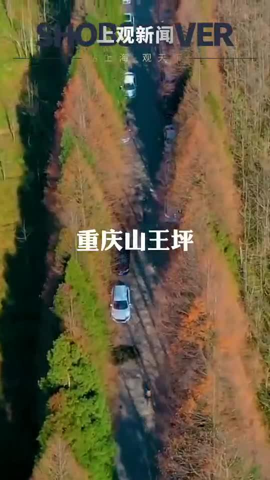 """秋冬时节, 南川山王坪再现"""" """"美景……"""