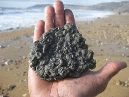 """海边上众人纷纷拾捡""""花纹石头"""",希望以此获得不菲的财富"""