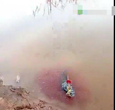 男子钓到花斑纹怪鱼发现鱼体布满红色颗粒,细看后果断放生