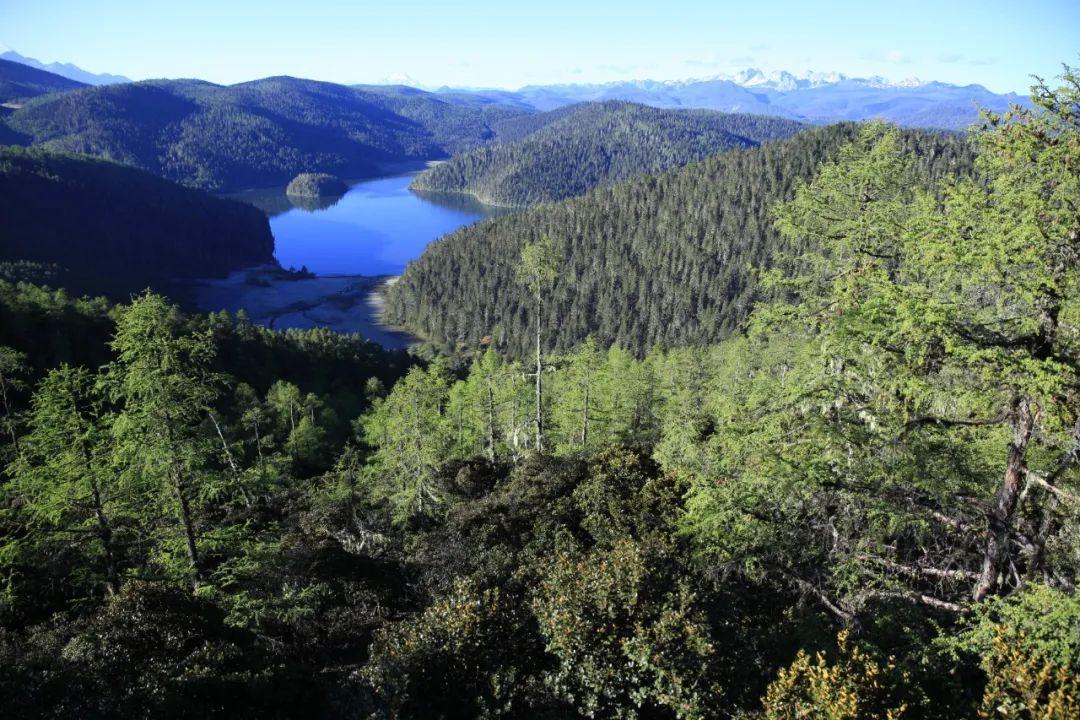 【关注】促进林下种植持续健康发展!省林草局向社会公开征求意见图片