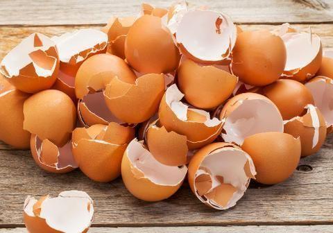 """用鸡蛋壳养花,少了""""这2步""""就得招虫子,养啥啥不行"""