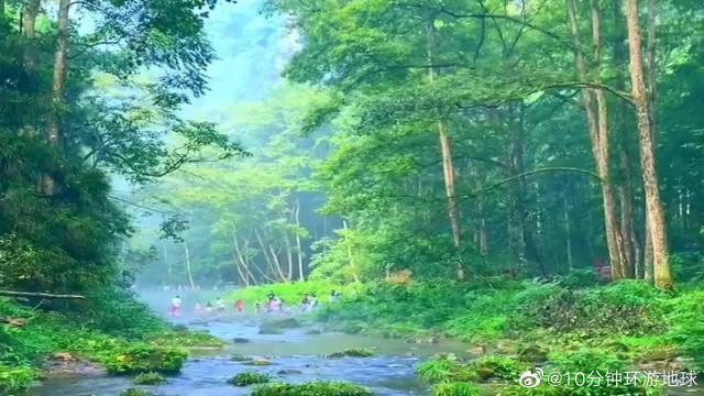 张家界国家森林公园金鞭溪,景色优美,简直就是人间仙境!