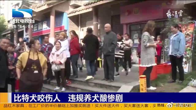 重庆北碚区一烈犬咬伤一女子 违规养犬酿惨剧