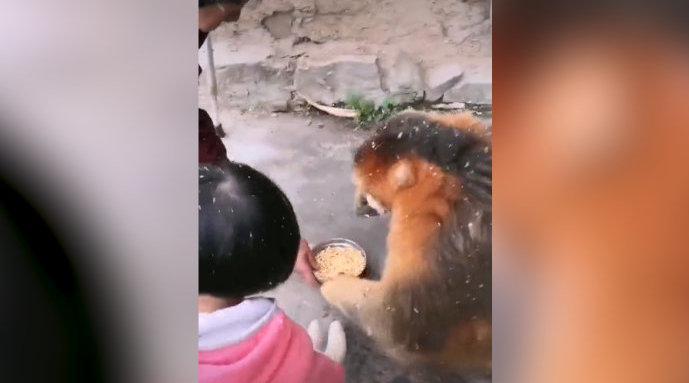 金丝猴在村民家蹭住一个月 林业局:定期派人察看