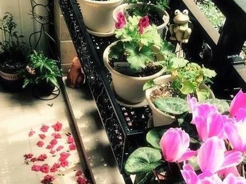栀子花、月季、三角梅,温度越低状态越差,需趁早下手修剪!