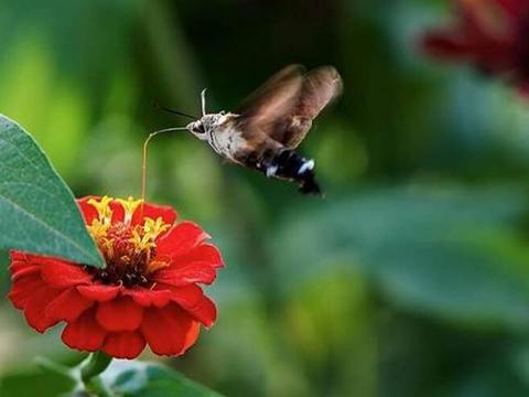 昆虫正在消失,地球可能会有一场巨变,科学家的办法能挽回吗?