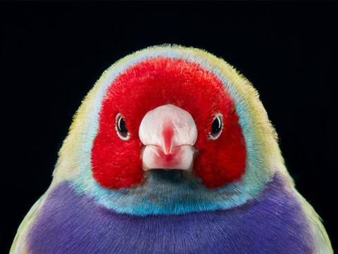 摄影师拍下即将消失的野生鸟类,看一个少一个,每只都无比珍贵