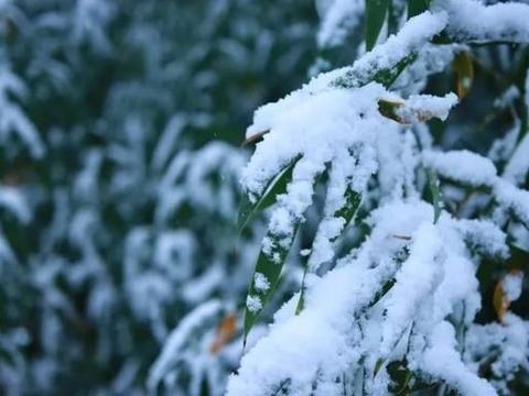 杨凌的雪景,你爱了吗?