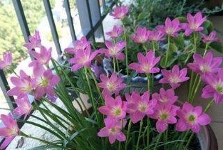 想要植物长得好,一种花肥炒一炒,养花盆底垫一些,3年不用施肥