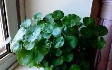 养花先养根,浇水加点它,不花一分钱,根系爆盆,植株健壮!