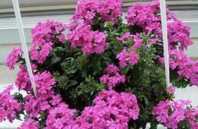 别再把这东西扔了,养花盆里加一块,花多叶绿,比花肥强10倍!
