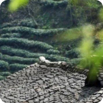 武都区花椒种植面积稳定在一百万亩……