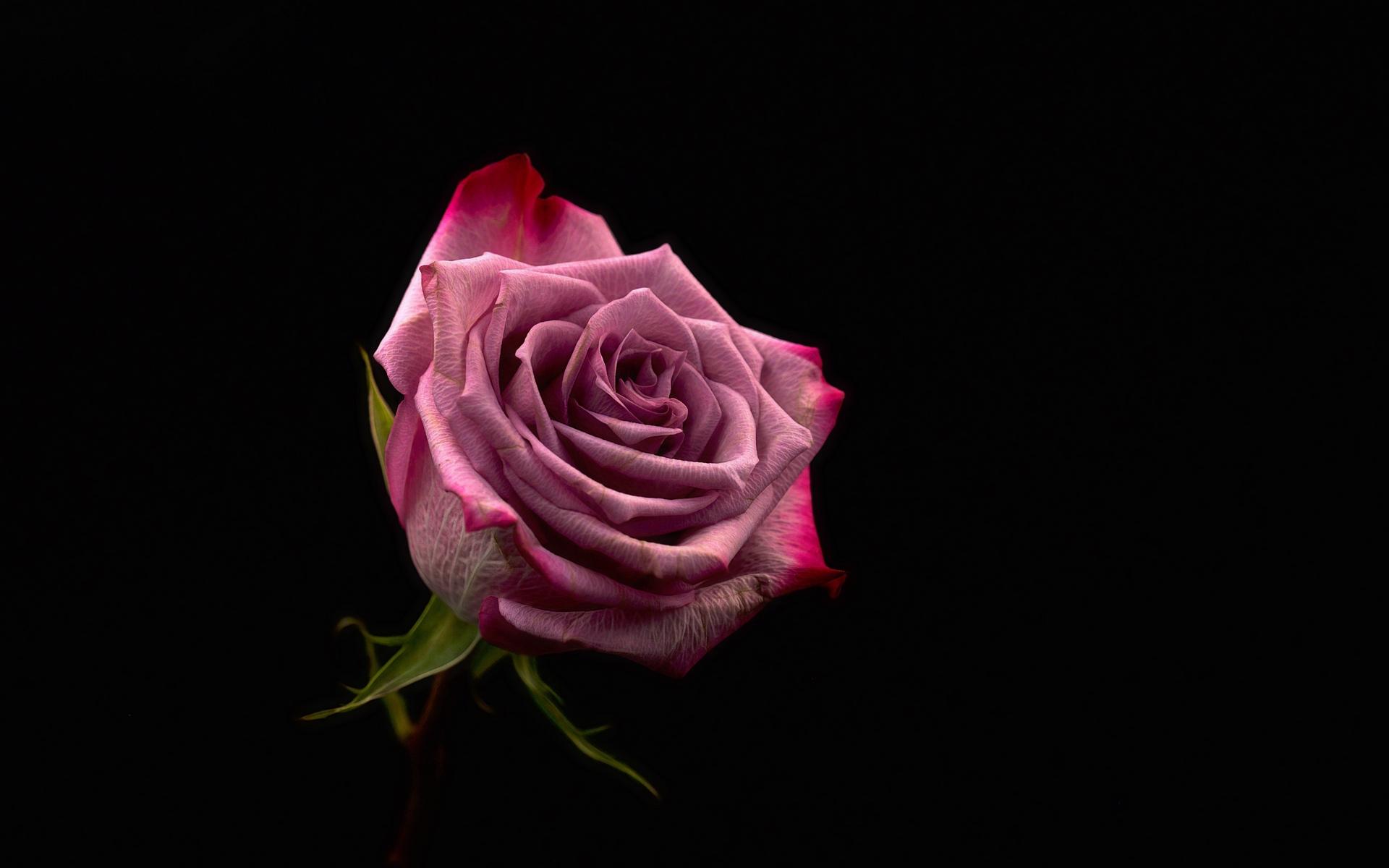 十二生肖中,四大生肖,本周红鸾星动,桃花运大顺,真爱就在身边