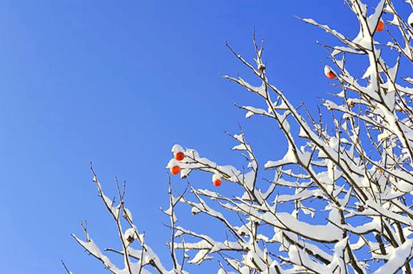 """浆果、草籽被""""冰封"""" 请市民投食助鸟儿过冬"""