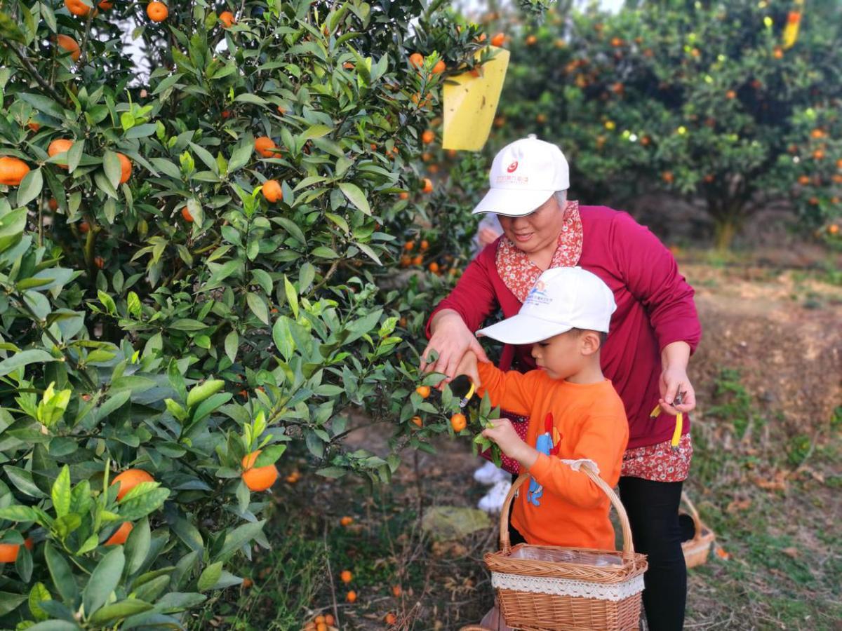 广西柳城县特色产业助力脱贫