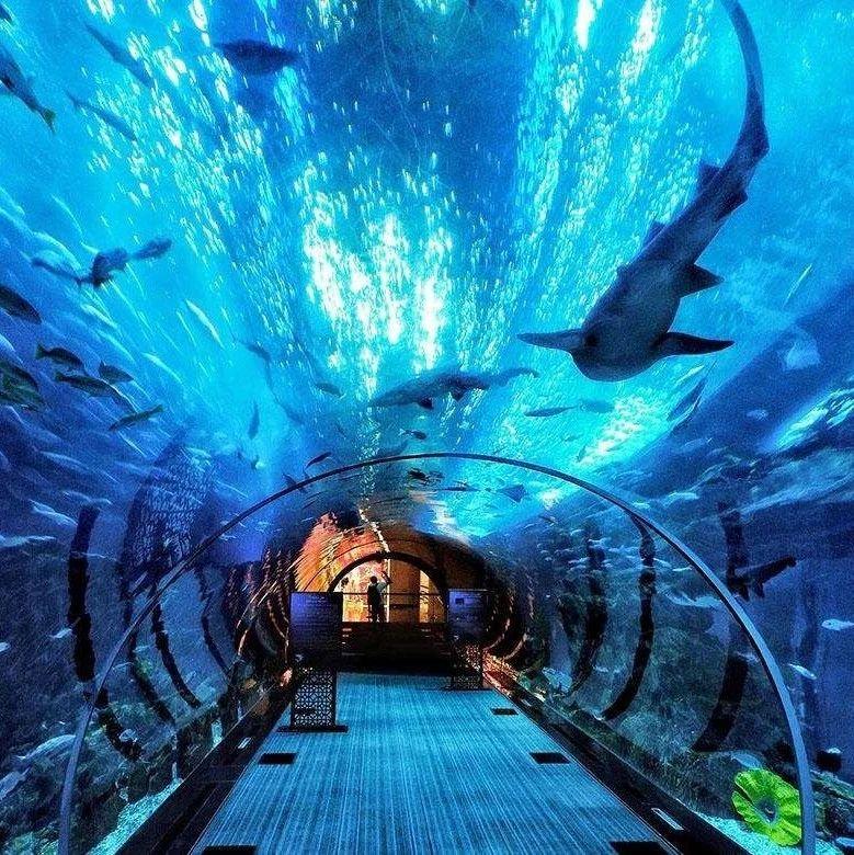 【东盟风情】不可错过的菲律宾马尼拉海洋公园