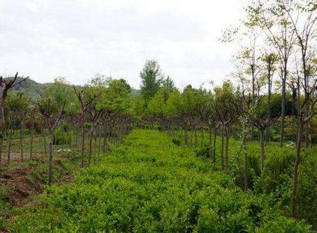 安徽已建立林木种质资源信息系统