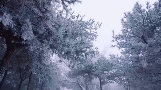 玉树琼花如童话世界 济南跑马岭现雾凇景观