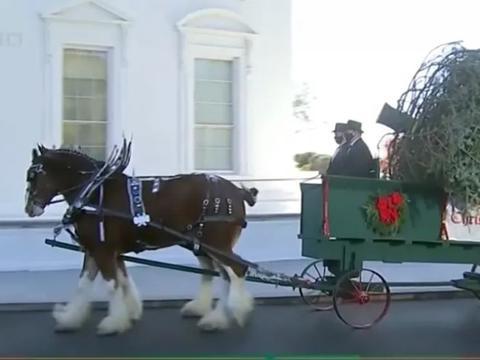 感恩节将至,白宫缩小庆祝规模,美航空客流创疫情高峰