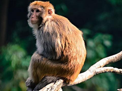 生肖猴:11月25号老天给你准备了天大的喜事,一生一次接不接随你