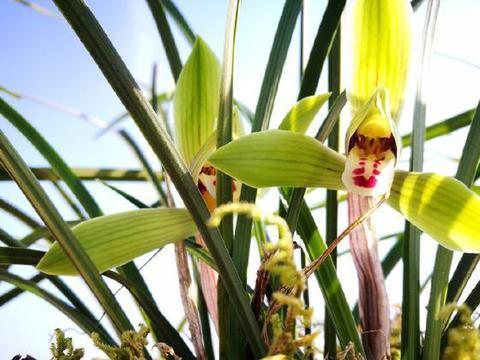用这种方法种兰花,基本上有死无活,新手万万要注意
