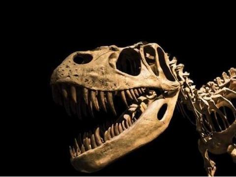 饥饿的恐龙会吃掉同类,骨骼化石上都是咬痕,让人不忍心看